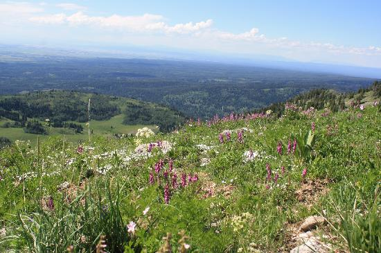 Grand Targhee Ski Resort: this is what the trail looked like...