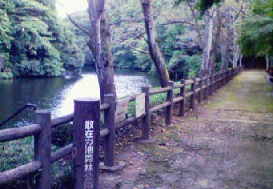 Hakusan Shrine: 近隣にある散在が池(鎌倉湖)公園