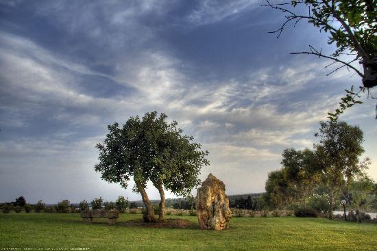Sole del Mediterraneo: carrubo con panchina in pietra vista laghi alimini