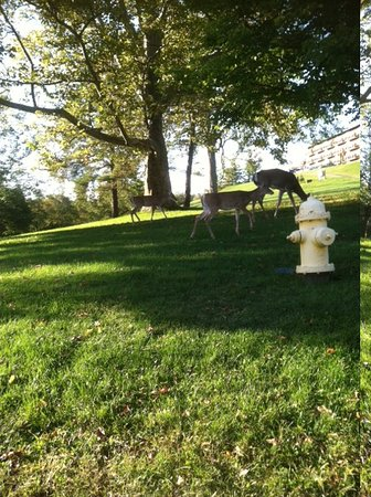 Wheeling, Batı Virjinya: free roaming deer on property