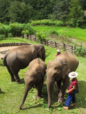 Galyani Vadhana, Thailand: Elephants at the lodge
