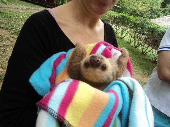 Jaguar Rescue Center: Baby sloth!