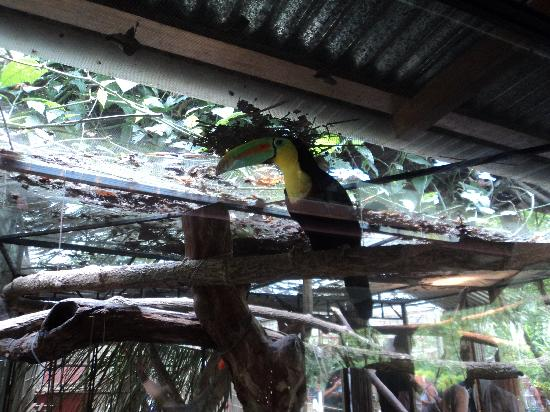 Jaguar Rescue Center: Toucan