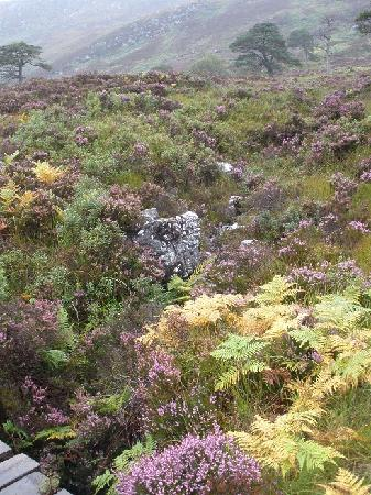 Kerrow House: Glen Affric is magically beautiful.  This photo was taken with a tiny point and shoot camera on