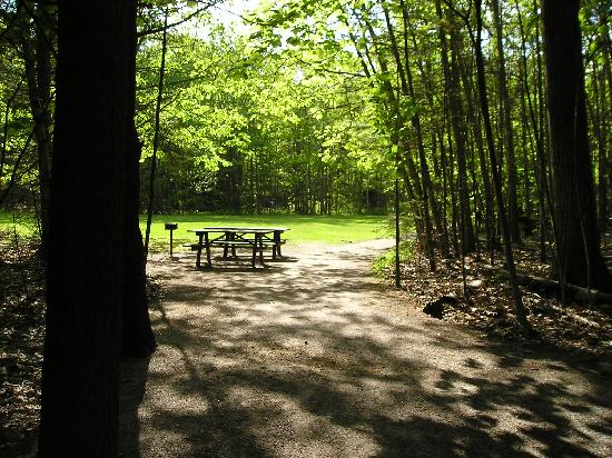 Wolfe's Neck Woods State Park: Wooded and gassy picnic area with barbque options