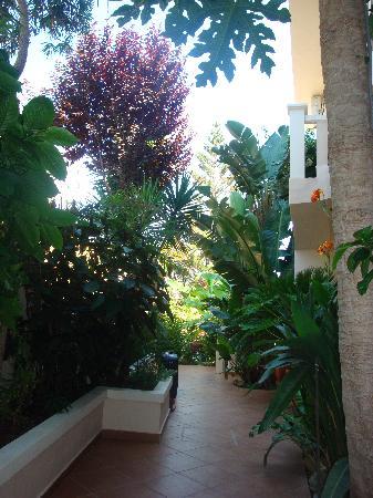 Frideriki Studios & Apartments: Frideriki's garden