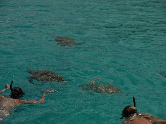 Little Arches Boutique Hotel : swimming with the turtles on the silvermoon!