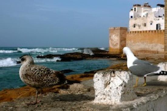 Travel Exploration Morocco Private Tours: Seaside Essaouira