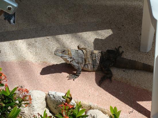 Mayan Palace at Vidanta Riviera Maya: friend by the pool