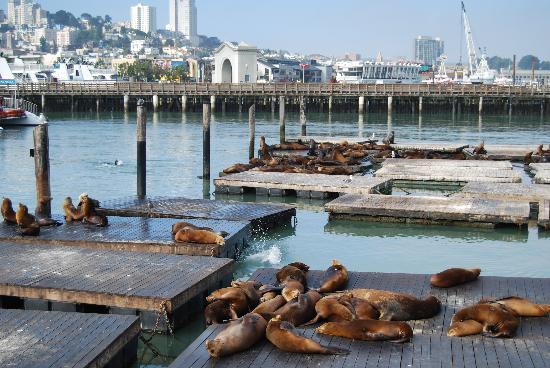Fisherman's Wharf: More stinky seals