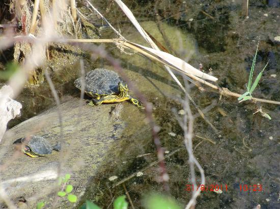 Hotel Ammos: Freshwater turtles 3km from Ammos