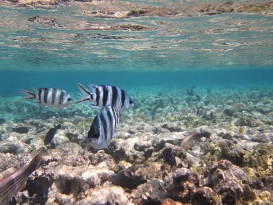 Hyatt Regency Sharm El Sheikh Resort: from jetty