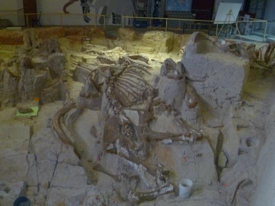 Mammoth Site of Hot Springs: mammoth skeleton