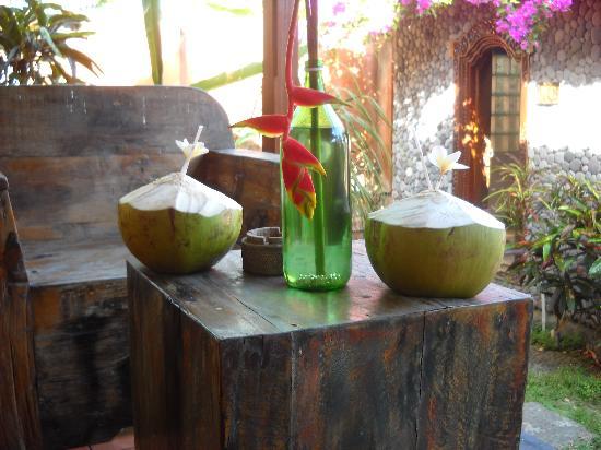 Kebun Impian: Coconut !!