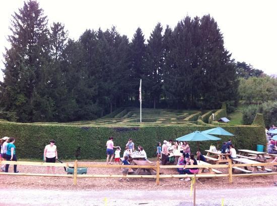 Honey Pot Hill: Hedge maze