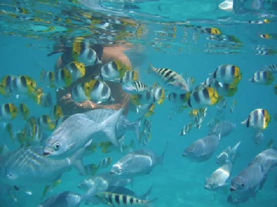 Teking Lagoon Cruises: Feeding Frenzy!