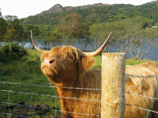The Hairy Coo: Sep 2011