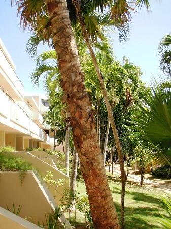 Sol Palmeras: Más jardines del hotel...x ahí es una de las entrads a las habitaciones sin pasar x el lobby