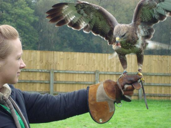 Cheshire Falconry: Fantastic!