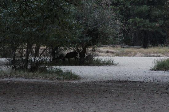 Housekeeping Camp: Deer by the Merced.