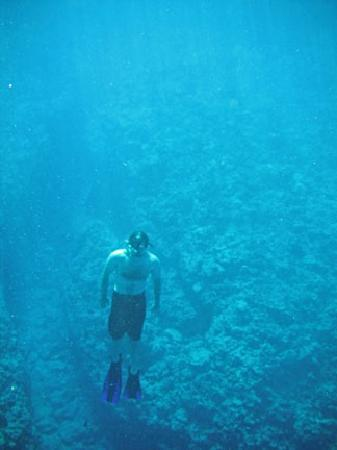 Black Pearl Charters: Diver heath
