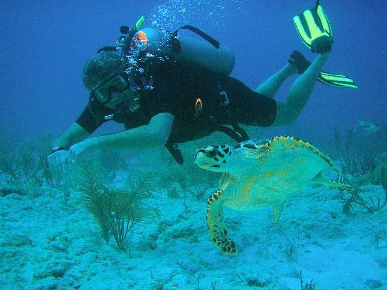 Scuba Fred's: Swimming with a friend.