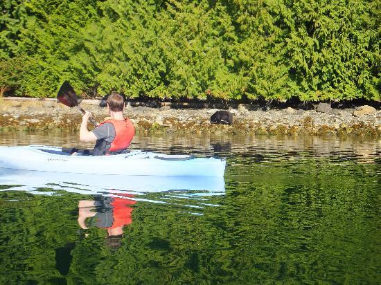 Water's Edge Shoreside Suites: kayaking to bear