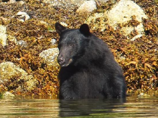 Water's Edge Shoreside Suites: bear getting a closer look at us