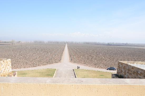 Bodega Catena Zapata: View