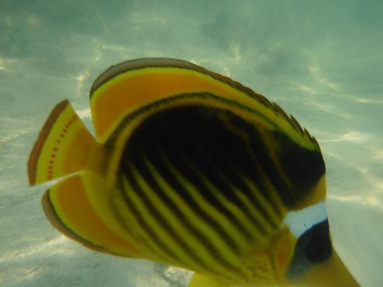 Coral Sea Waterworld Resort: Fish on the reef