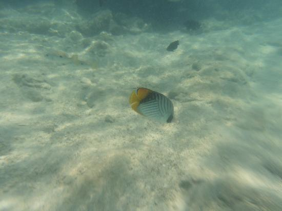 Coral Sea Waterworld Resort: More fishes