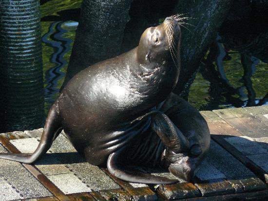 Archipelago Wildlife Cruises: Sea Lion