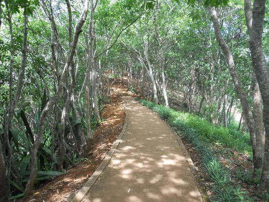 Chamarel Waterfall: Il sentiero