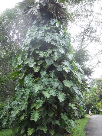 SSR Botanic Garden: La doppia pianta