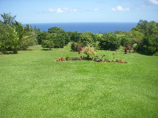 Maui Ocean Breezes: Beautiful lawn and view to enjoy.
