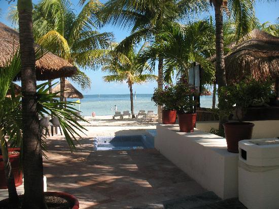 Oasis Palm: Beautiful grounds