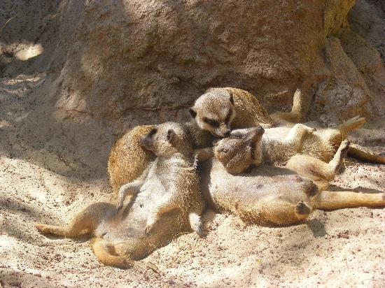 Bioparc Fuengirola: ...and the little one said roll over!