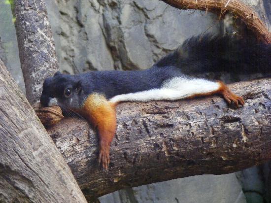 Bioparc Fuengirola: Phew! That's a tough nut to crack!!