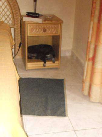 Horizontes La Ermita: hotel dog asleep in our bedside cabinet. Must remember to shut the door next time..