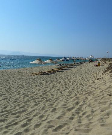 Plaza Beach Hotel: Beach