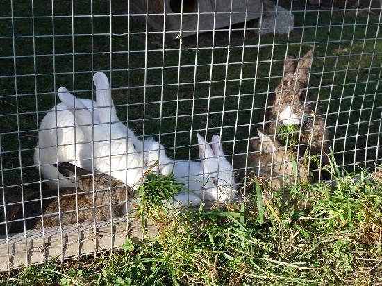 Familotel Alpenhof: Conigli (possibilità di coccolarli ed accarezzarli)