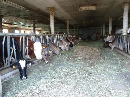 Familotel Alpenhof: Visita alla fattoria