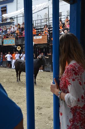 Do! Valencia: Bull Run