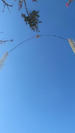 Zero Gravity Thrill Amusement Park: Sky coaster, mad ride.....Dallas Zero Gravity