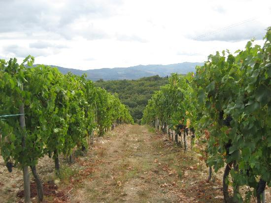 Tuscan Wine Tour by Italy and Wine: Vineyards in Tusany