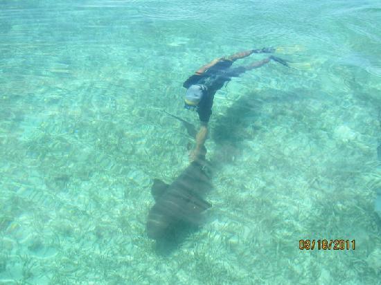 Placencia Eagle Ray Tours: Rene with  a nurse shark