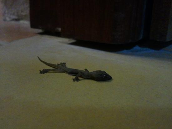 Casa Antigua: RIP lizard