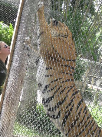 McCarthy's Wildlife Sanctuary: Amazzzzzing!