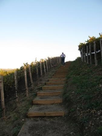 Vino Bello Resort: Climbing up into the vineyard. A great place for walking at sunset.