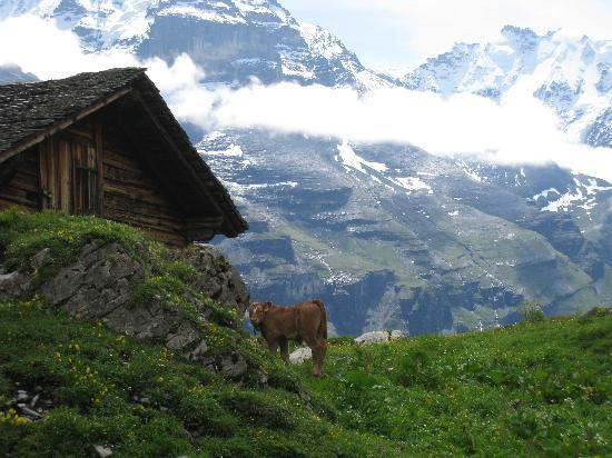 Chalet Fontana: Allmendhubel's North Face hike